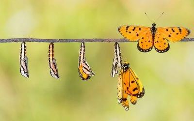 Can Organizations Evolve?
