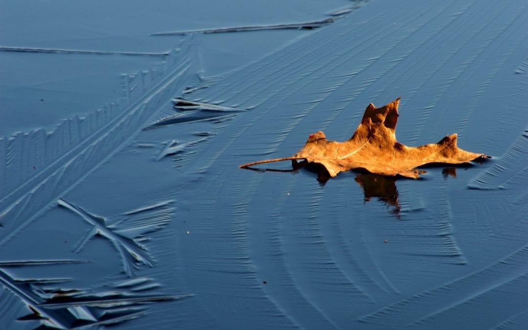 Thawing Organizational Ice