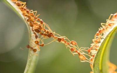 Nature Depends on Self-Organization