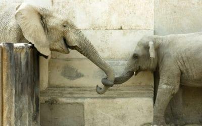 Seeing Interdependencies – Why It Matters